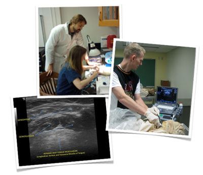 collage of shots of residents, medical students, and faculty working on otolaryngology research